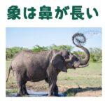 象は鼻が長い